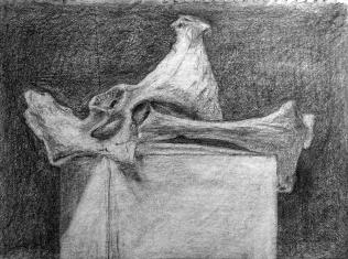 bone_cod_sketch_edited-1