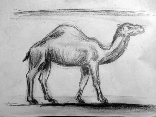 camel_sketch_edited-1