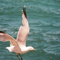 seagull_sharpedit 2